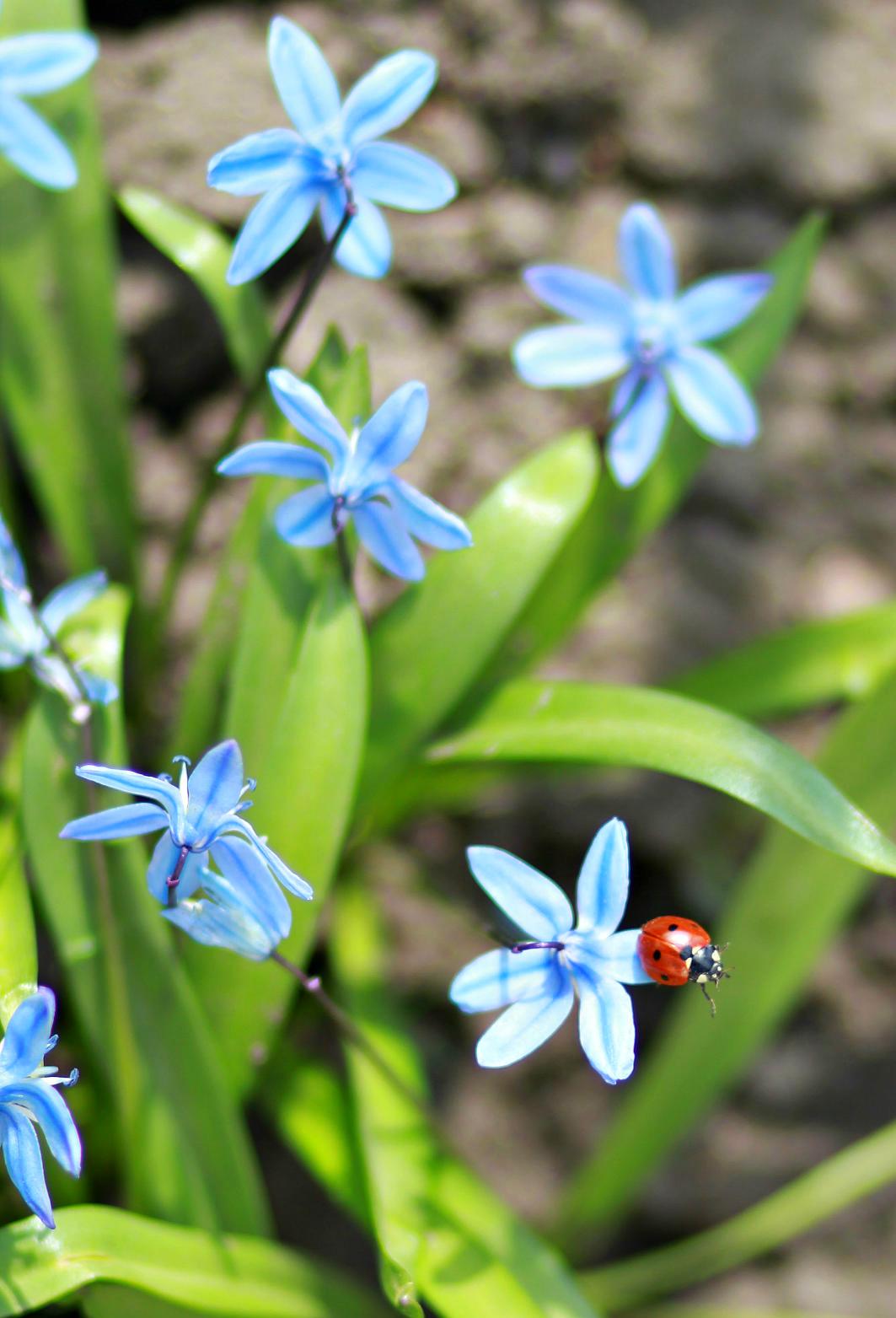 Весна идёт! Весне дорогу!. Блиц: весна идет!