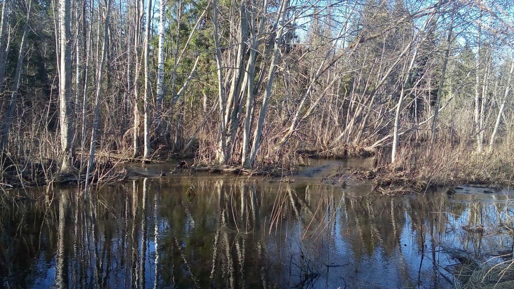 Лесные ручьи. Блиц: весна идет!