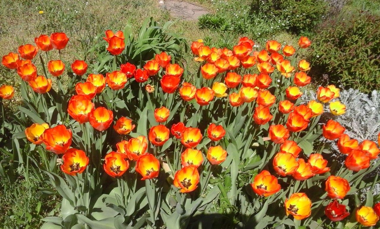 Апрель в Краснодаре.. Блиц: весна идет!