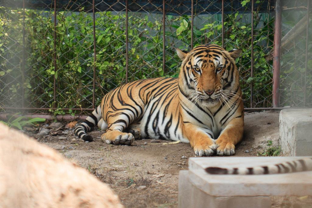 Поход в зоопарк в гости к Диким животным. Блиц: дикие животные