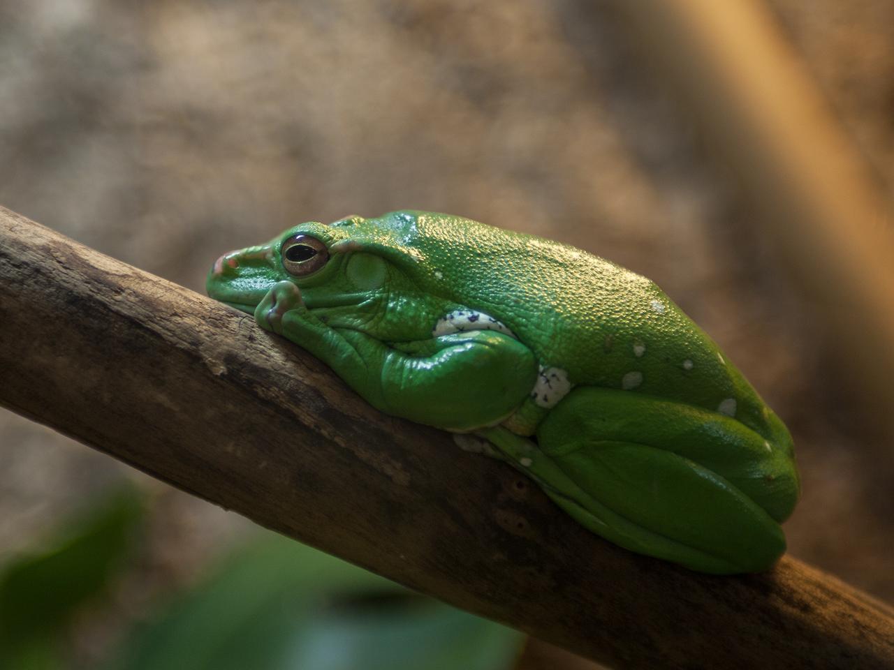 'Царевна лягушка'. Блиц: дикие животные