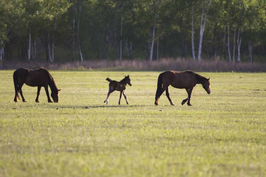 В лошадином семействе пополнение. Блиц: дикие животные