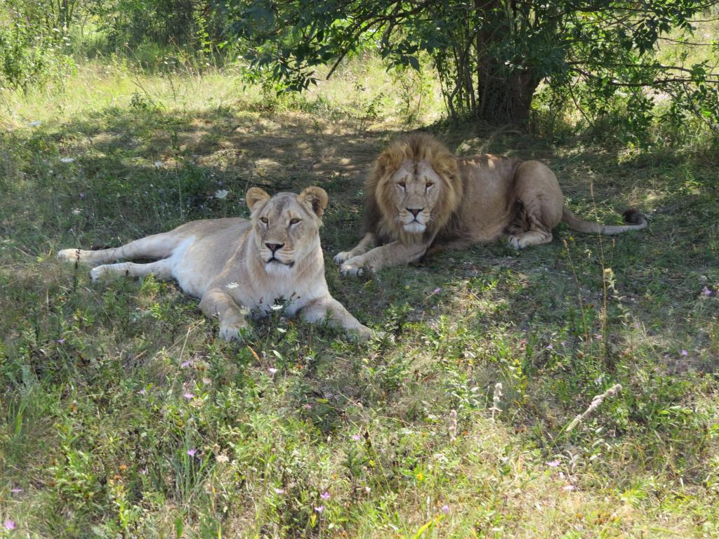 Семья. Блиц: дикие животные