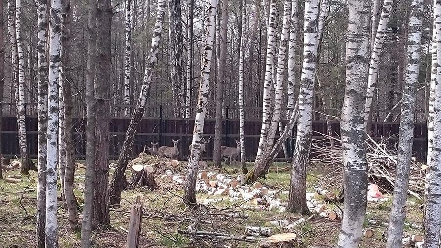 Олени на биостанции