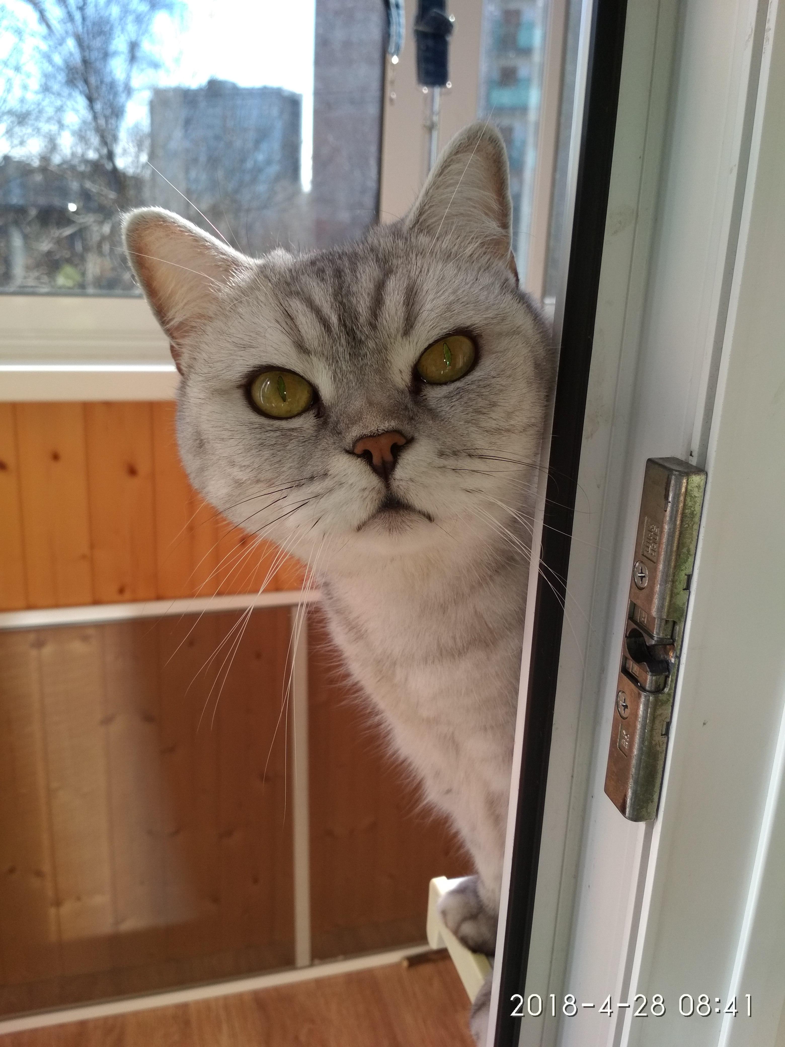 Любопытная Алиса. Блиц: семейство кошачьих