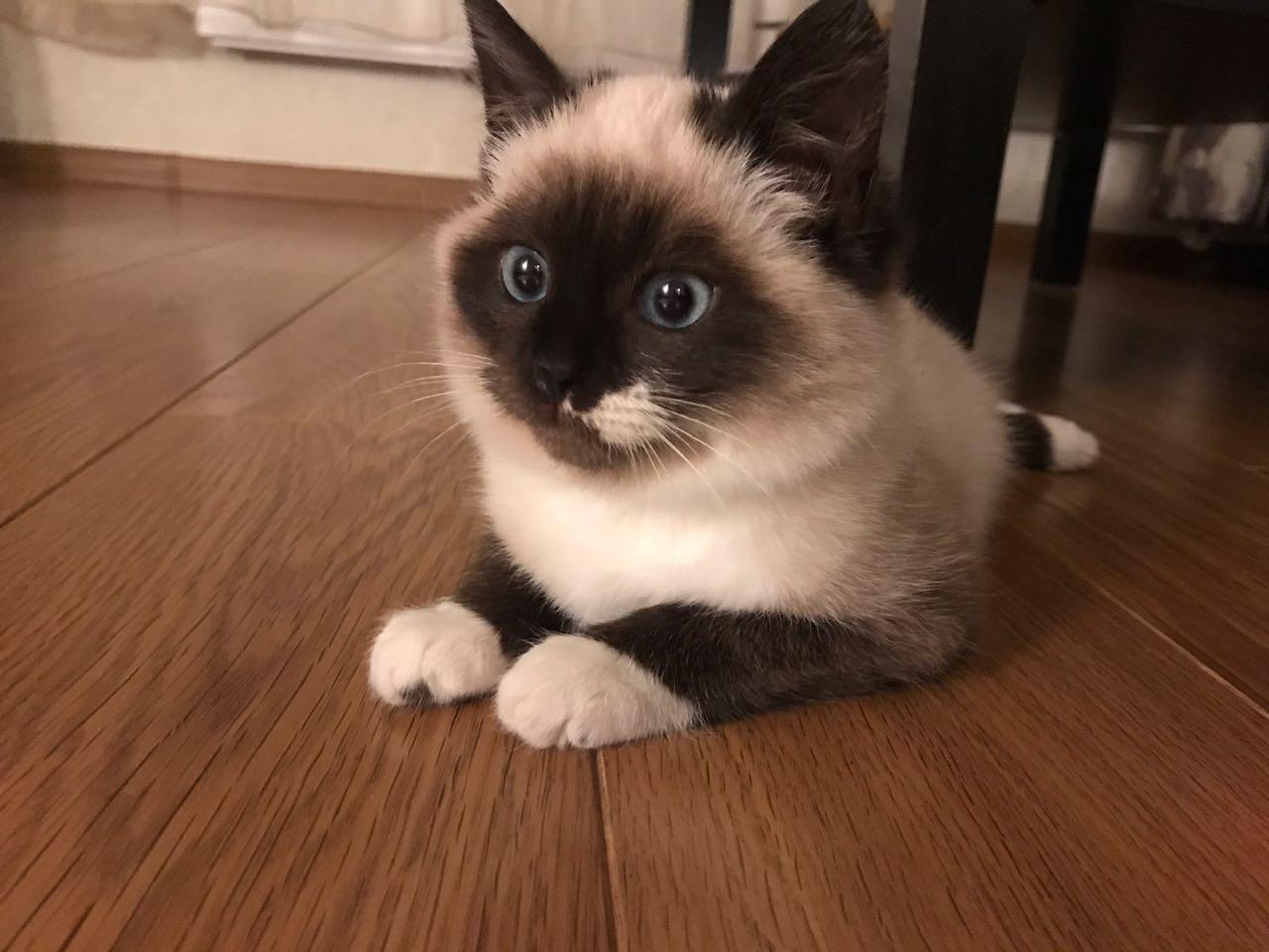 котенок по имени Софа :) . Блиц: семейство кошачьих
