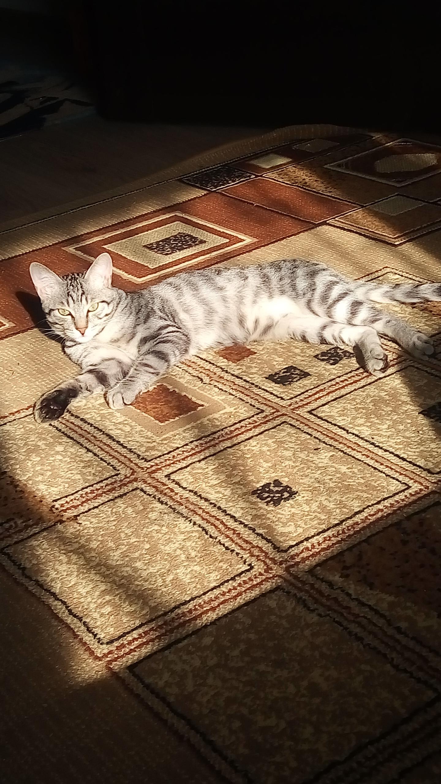 Наш Сеня. Блиц: семейство кошачьих