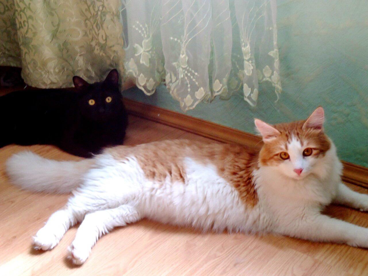 2 хомячка). Блиц: семейство кошачьих