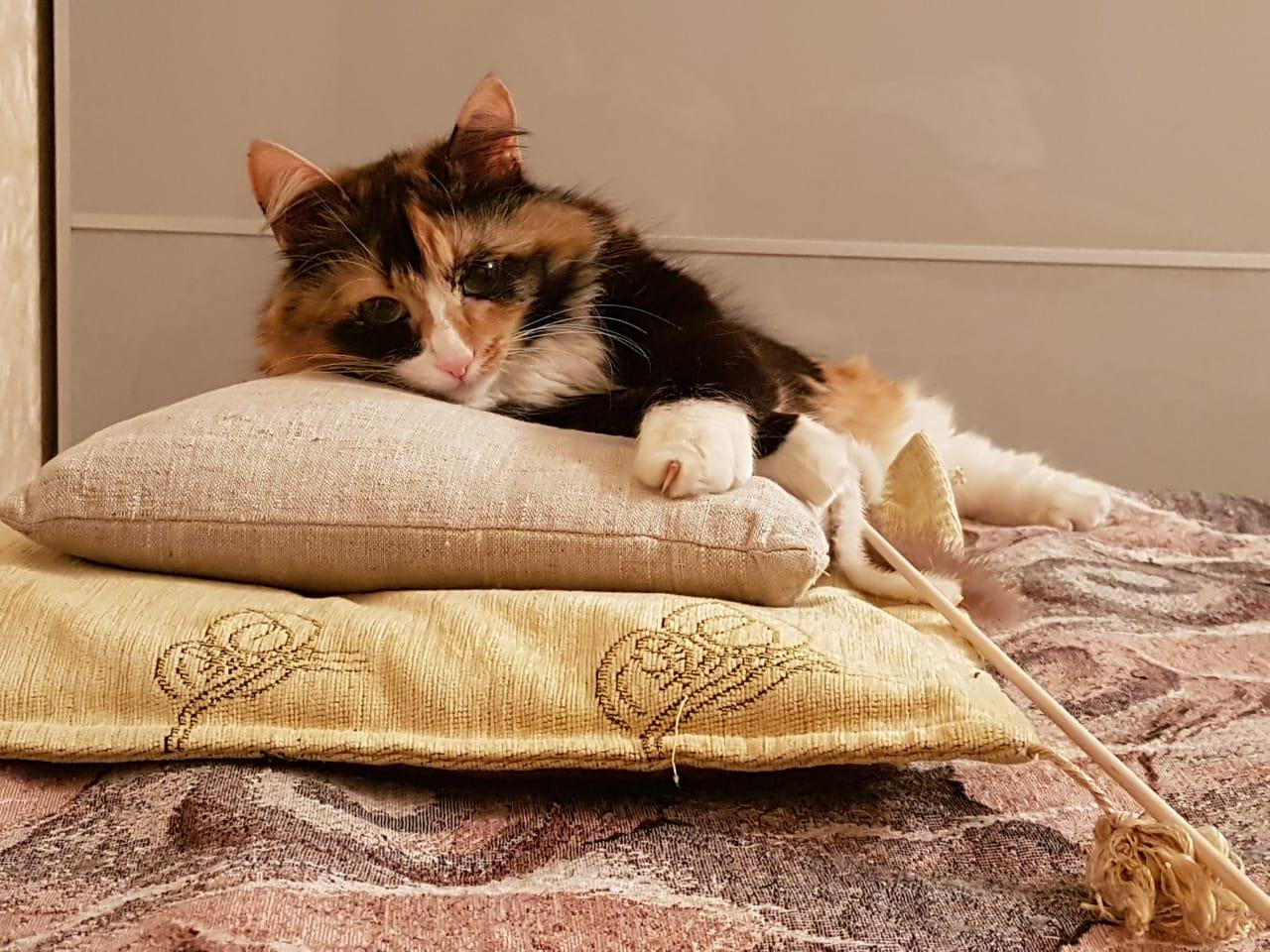 Клава спит, она устала.... Блиц: семейство кошачьих