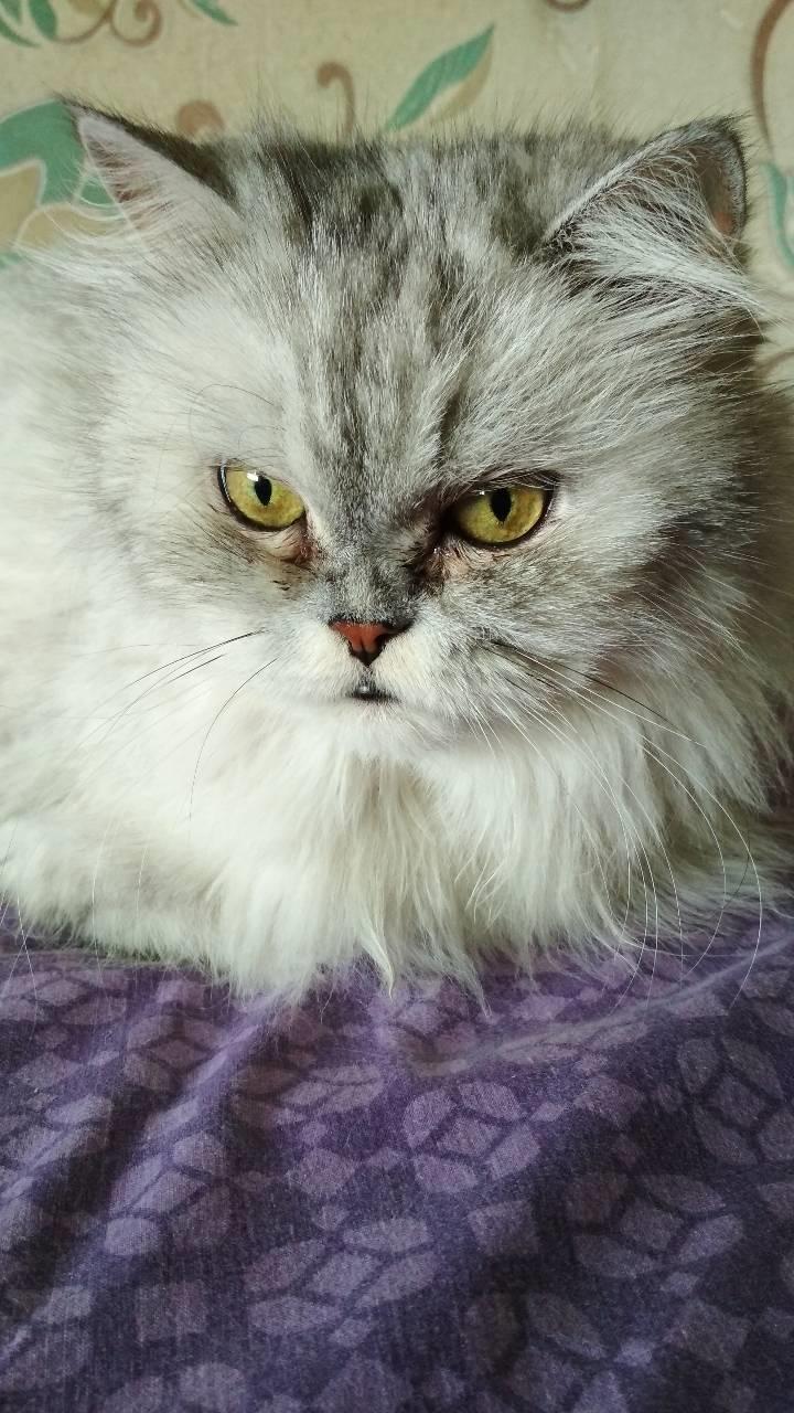 Наша Матильда. Блиц: семейство кошачьих