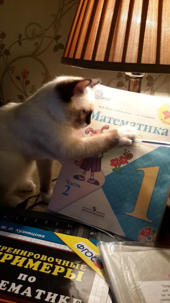 Лохматый математик. Блиц: семейство кошачьих