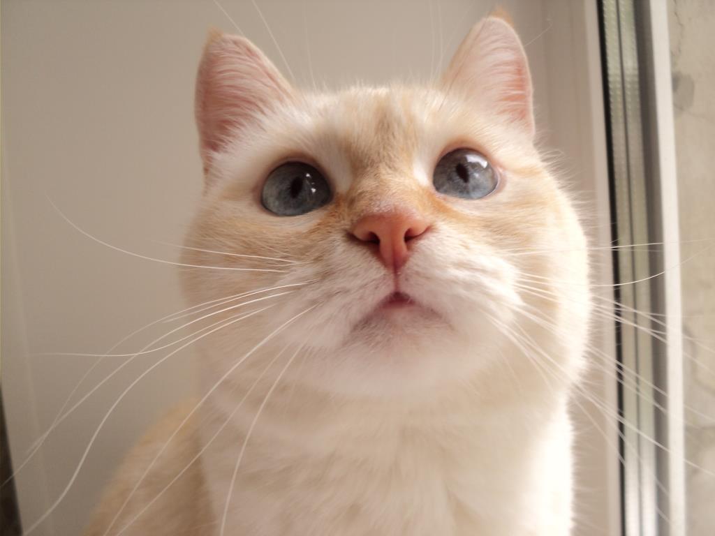 Красотка Лиза. Блиц: семейство кошачьих