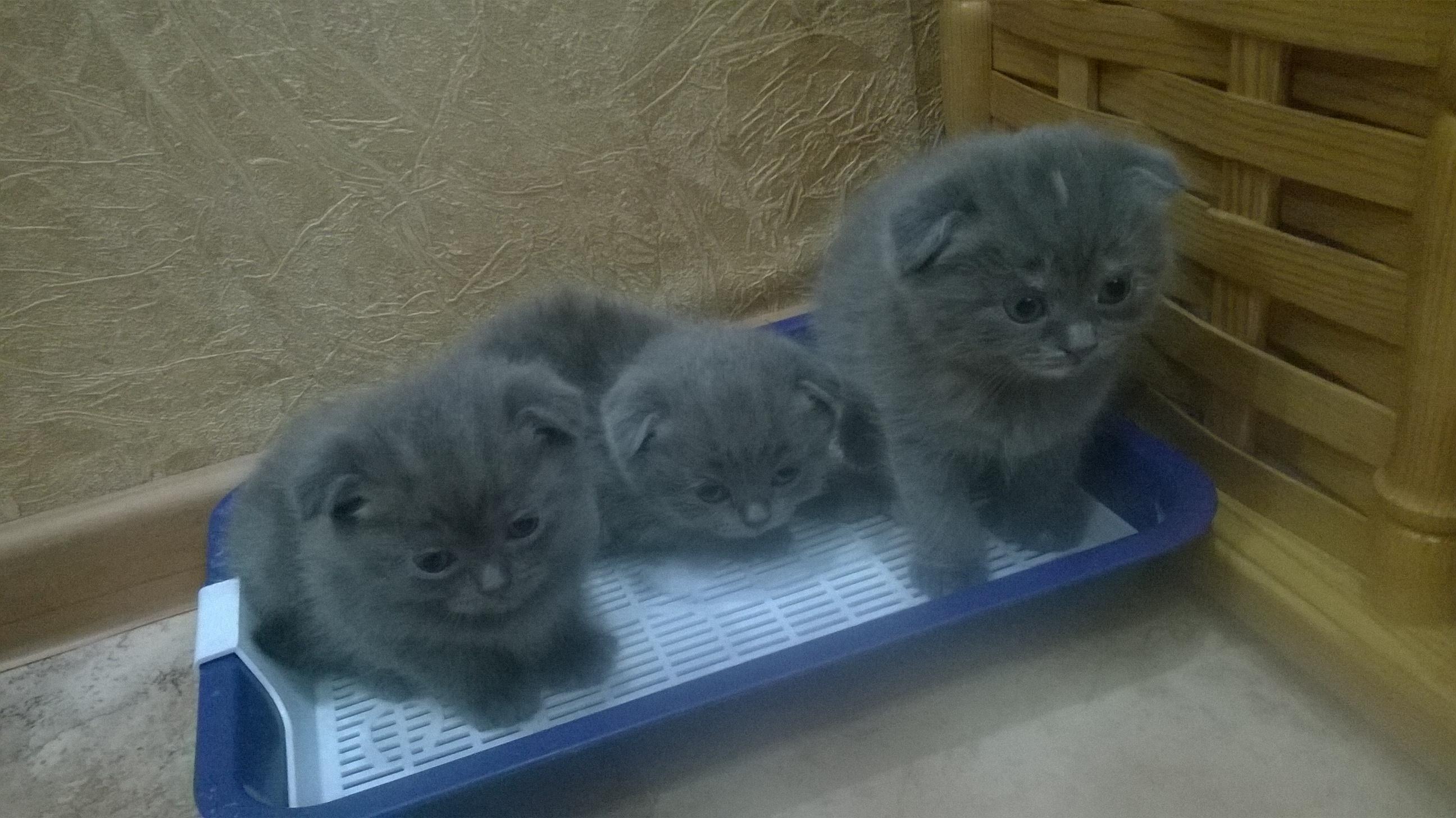 Трое из ларца. Блиц: семейство кошачьих