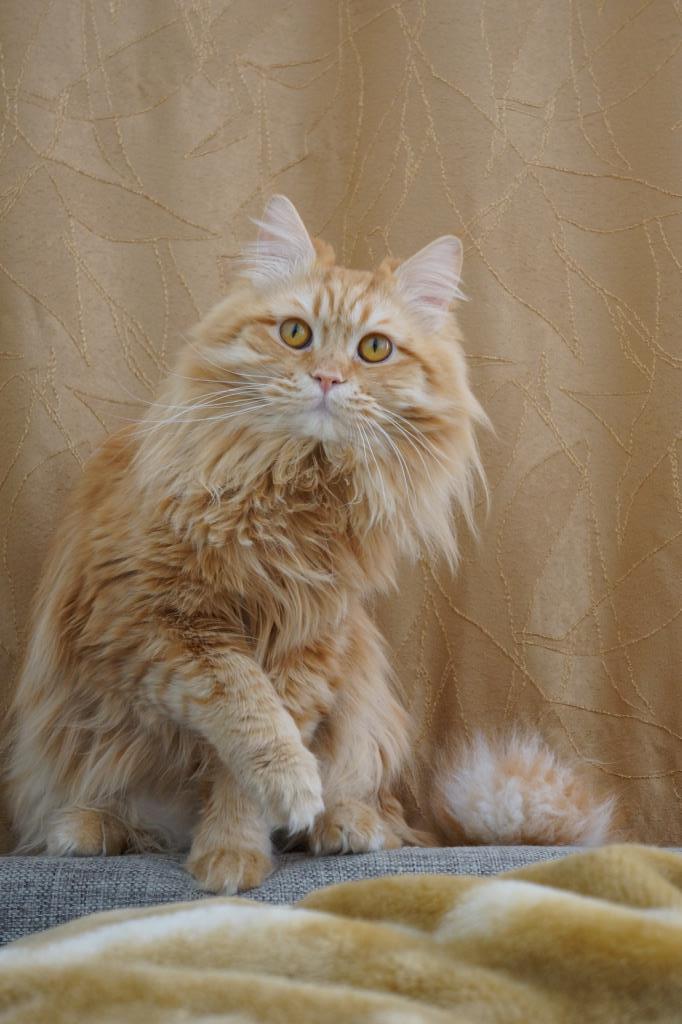 Красавец Вжик. Блиц: семейство кошачьих