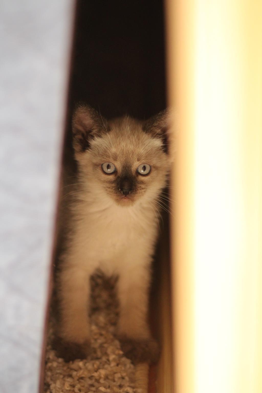 Злюка. Блиц: семейство кошачьих