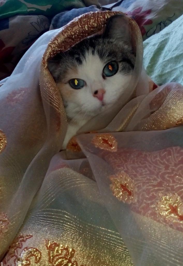Королева Мусильда. Блиц: семейство кошачьих