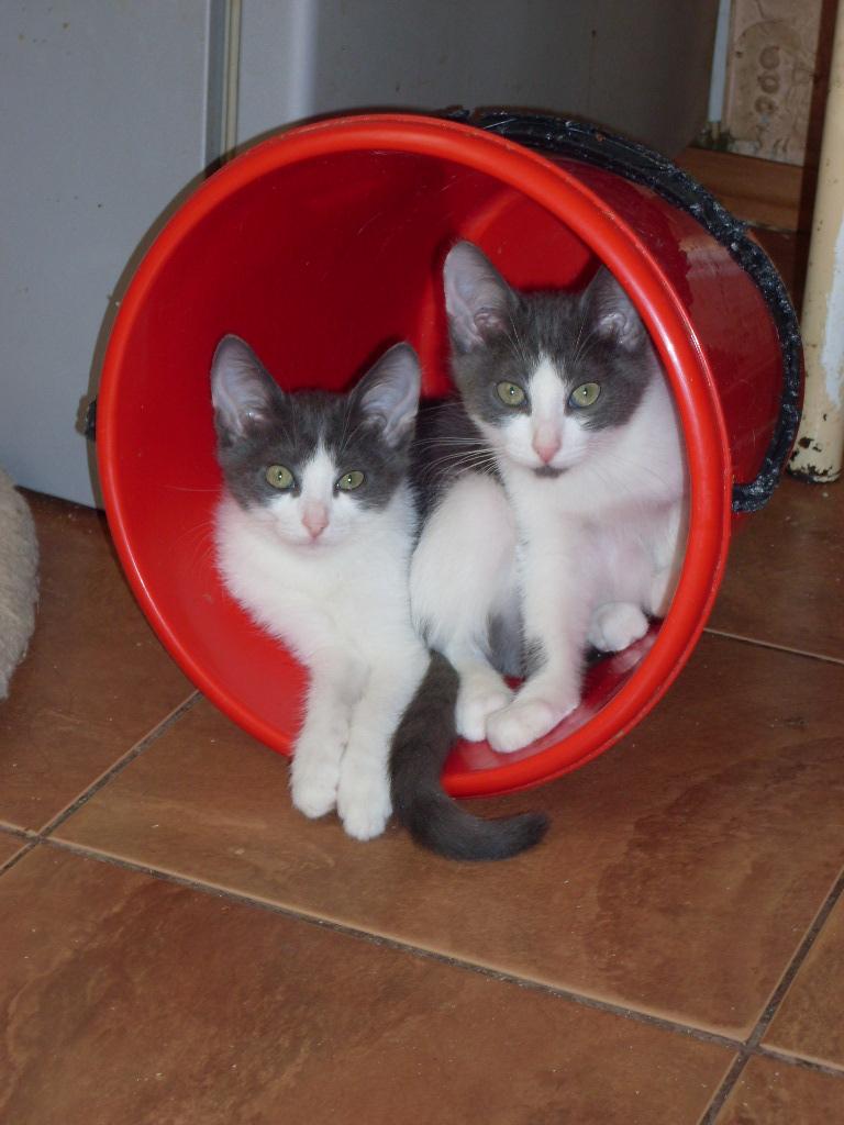 Два брата акробата:) Мио и Герман. Блиц: семейство кошачьих