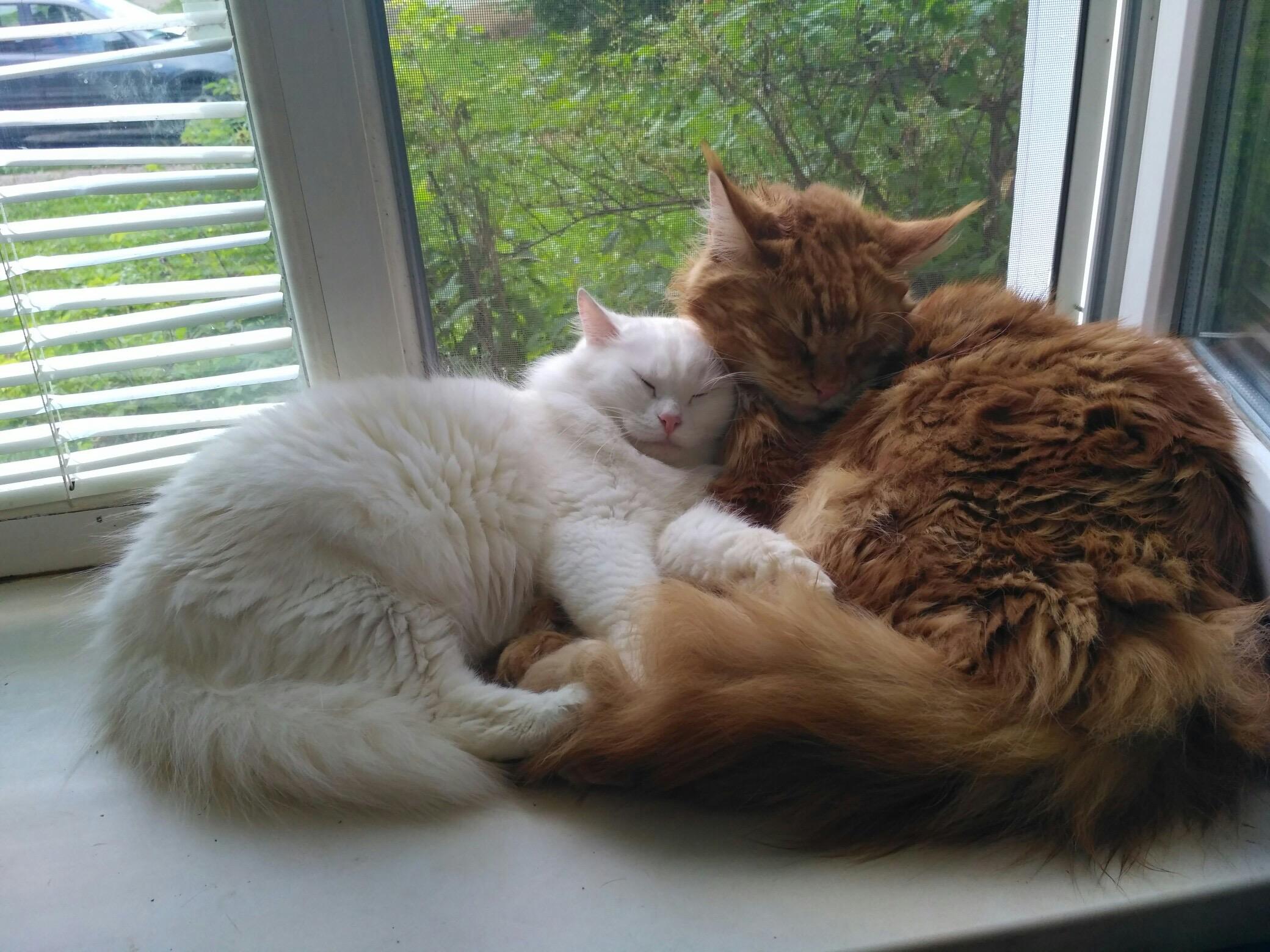 Инь-янь . Блиц: семейство кошачьих