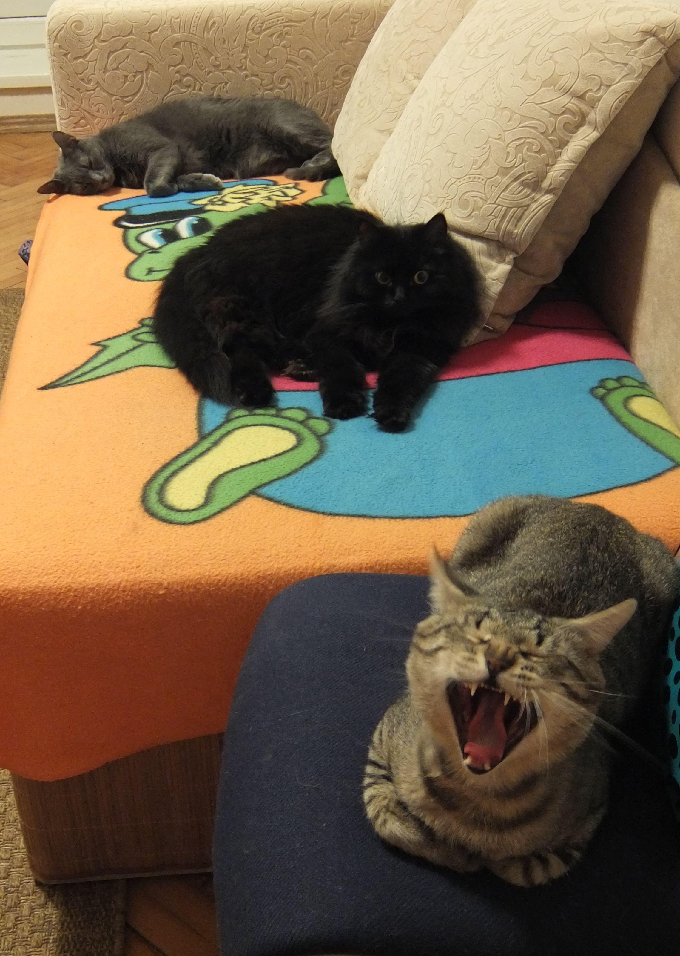 Великолепная тройка. Блиц: семейство кошачьих
