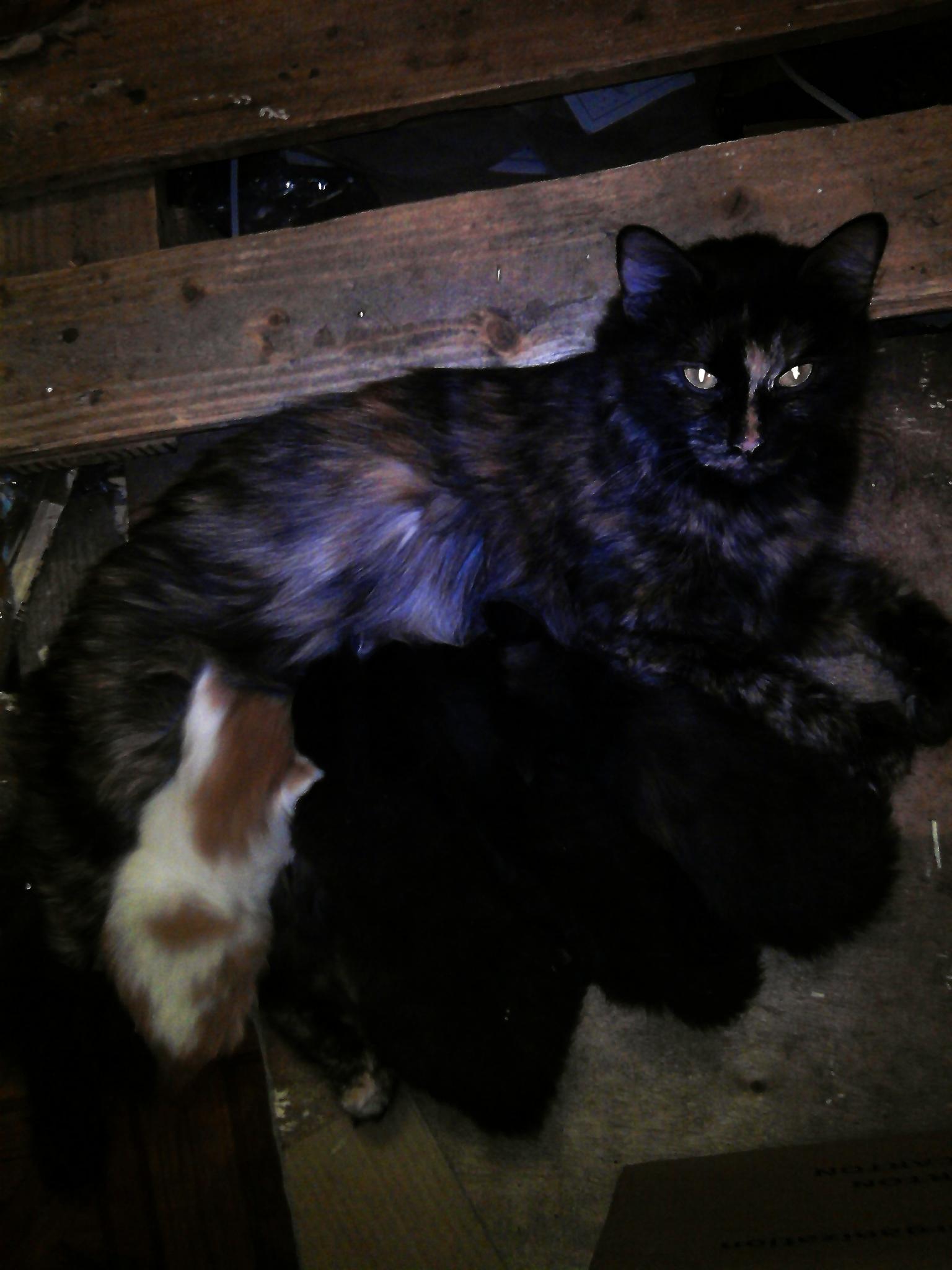 Кошечка со своими детками - котятами.... Блиц: семейство кошачьих
