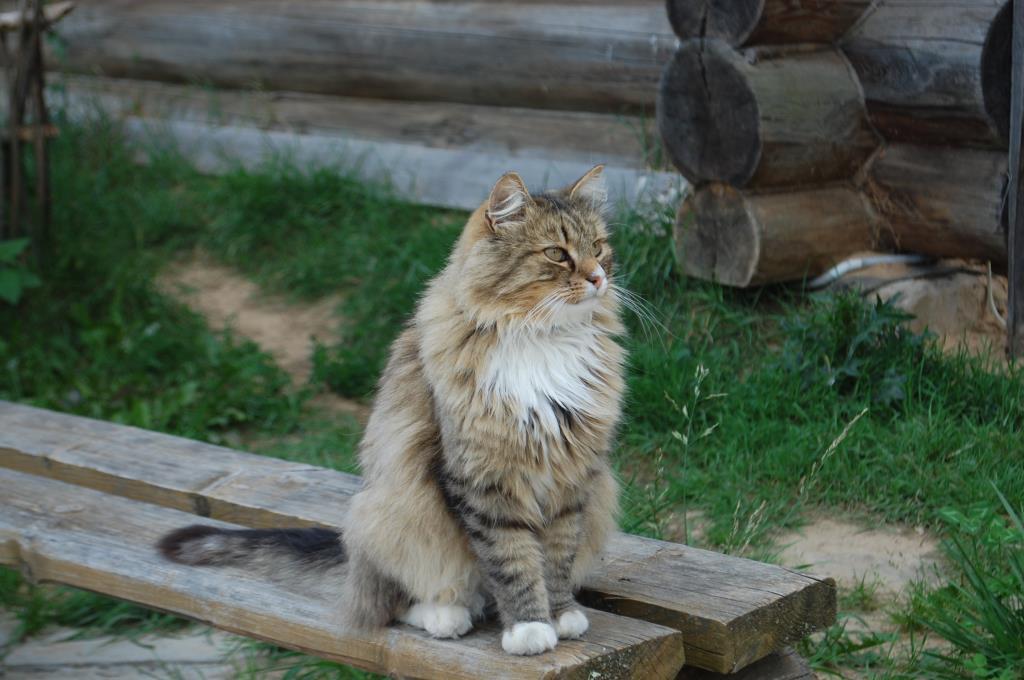 Хорошо в деревне летом.... Блиц: семейство кошачьих
