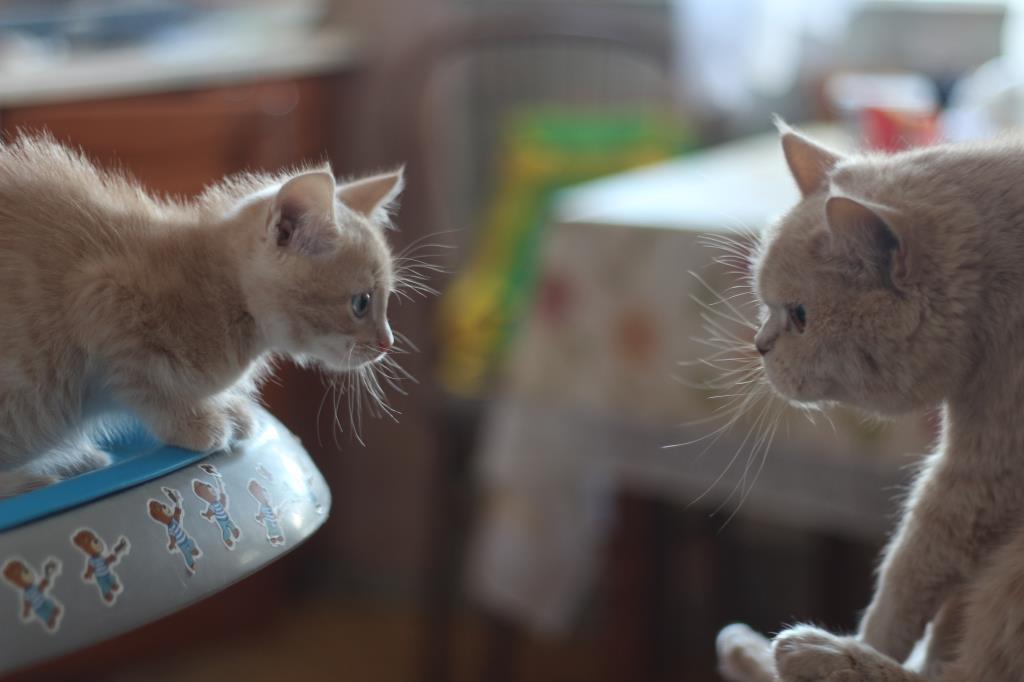 Ты кто такой?. Блиц: семейство кошачьих