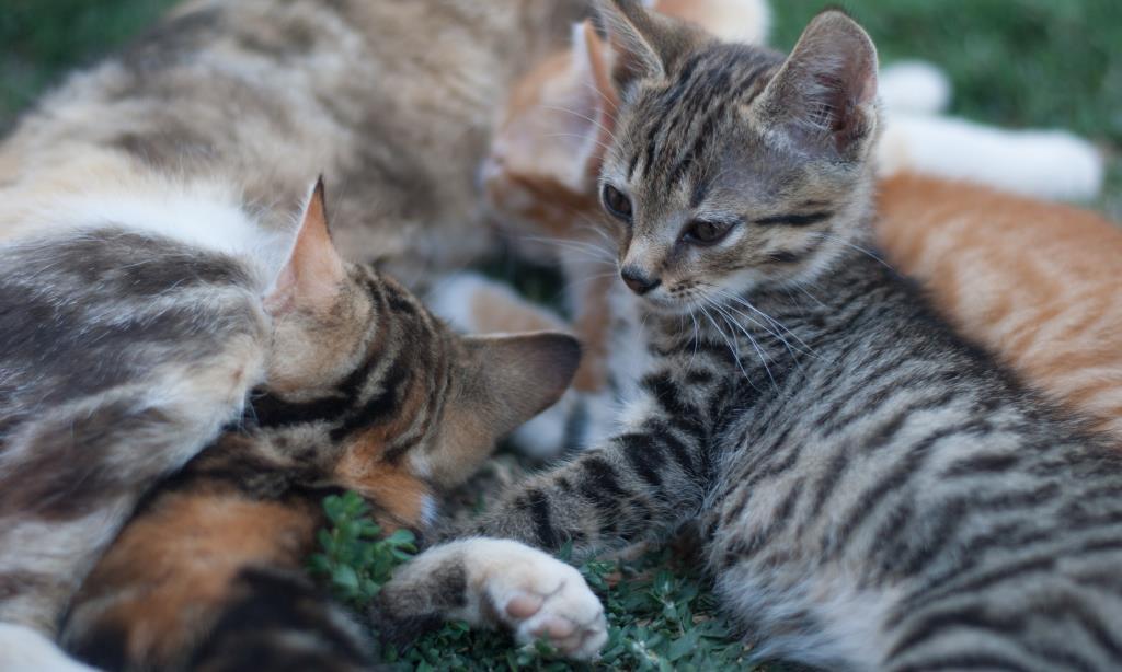 в кругу семьи. Блиц: семейство кошачьих