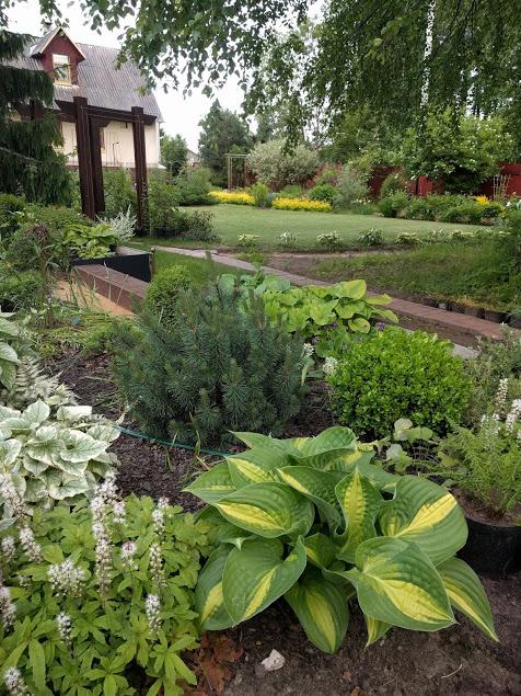Мой сад. Блиц: все зеленое