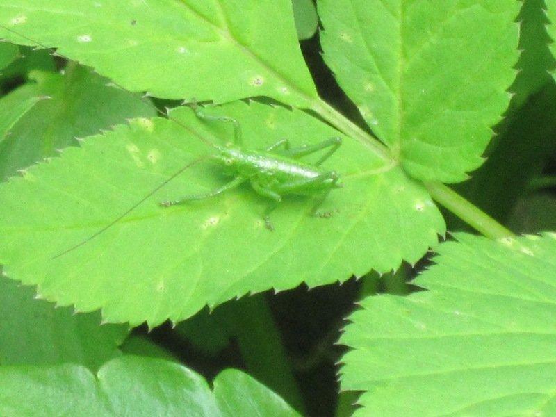 Зелёненький он был.... Блиц: насекомые