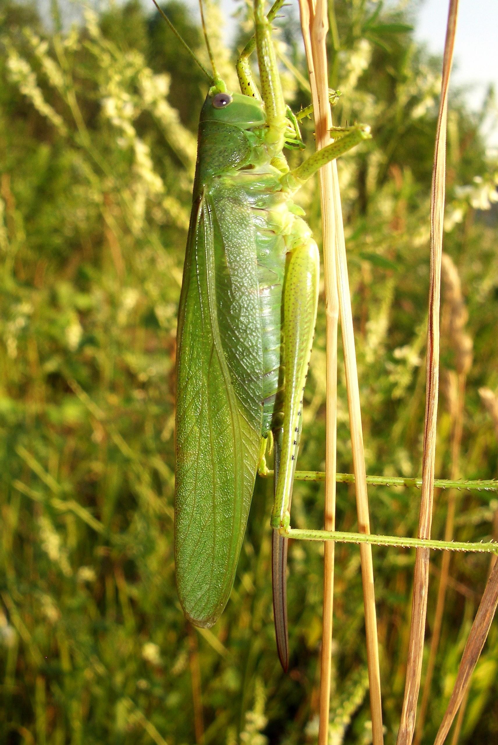 В траве сидел кузнечик, зелененький он был.... Блиц: насекомые