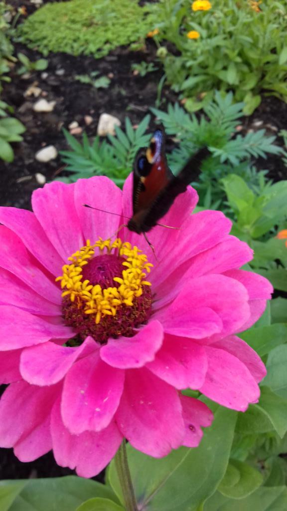 Бабочка . Блиц: насекомые