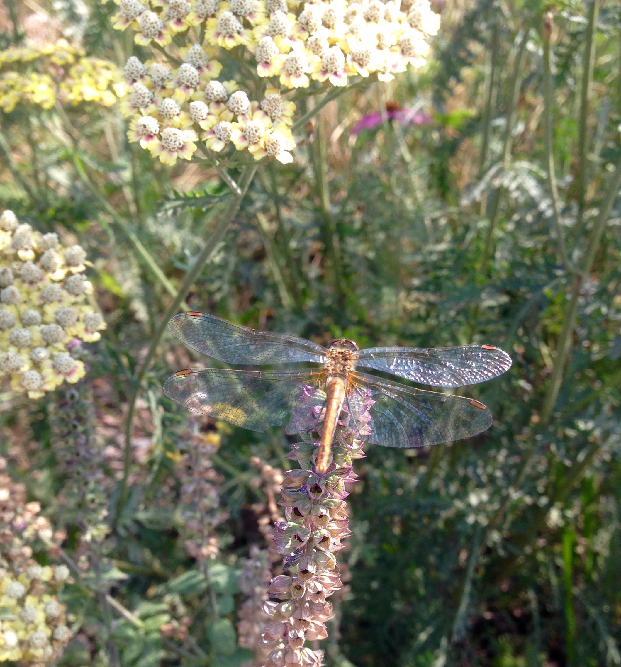 Попрыгунья стрекоза. Блиц: насекомые
