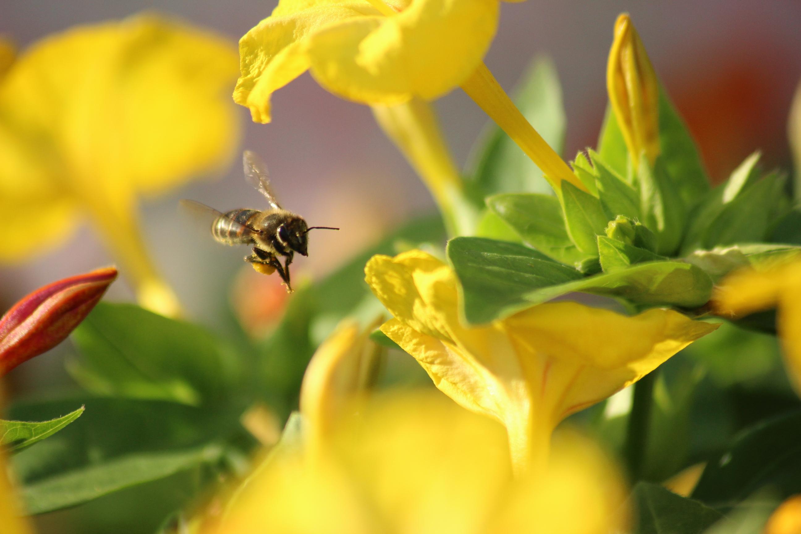 Пчела Майя. Блиц: насекомые