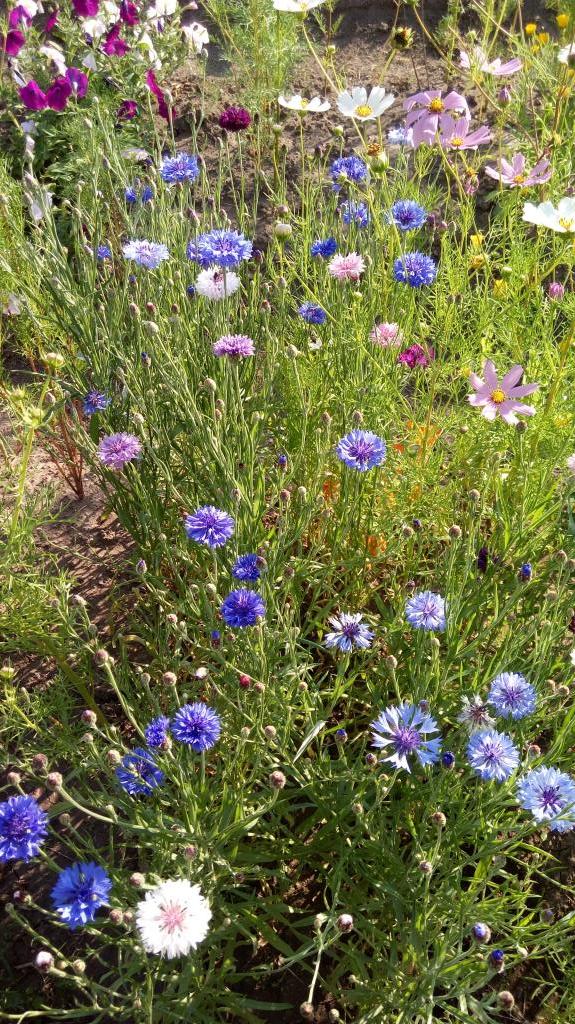 Цветочное лето. Блиц: летние цветы