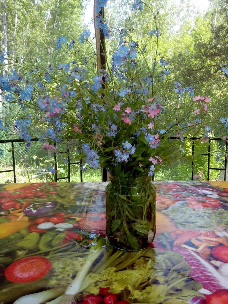 Незабудки. Блиц: летние цветы