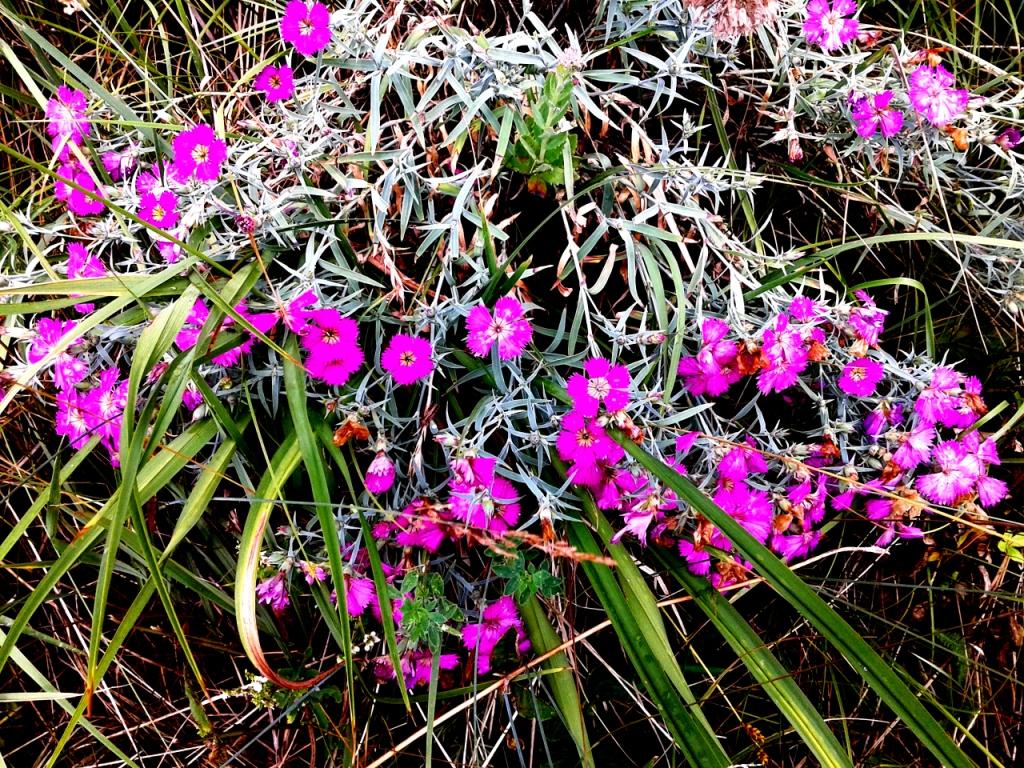 Сибирские цветы. Блиц: летние цветы