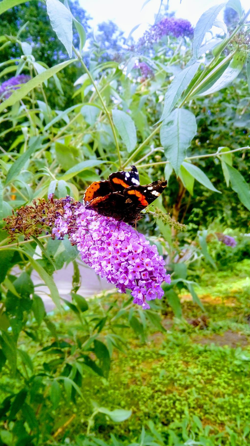 Гармония в природе. Блиц: летние цветы