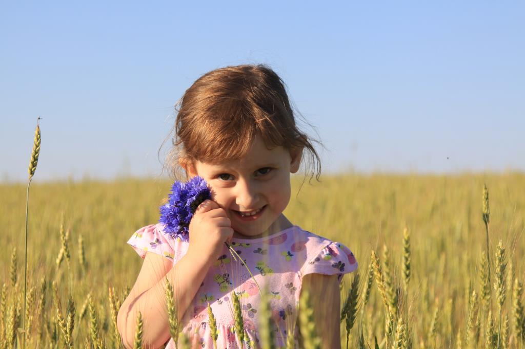 Пшенично-васильковое лето!. Наше лето
