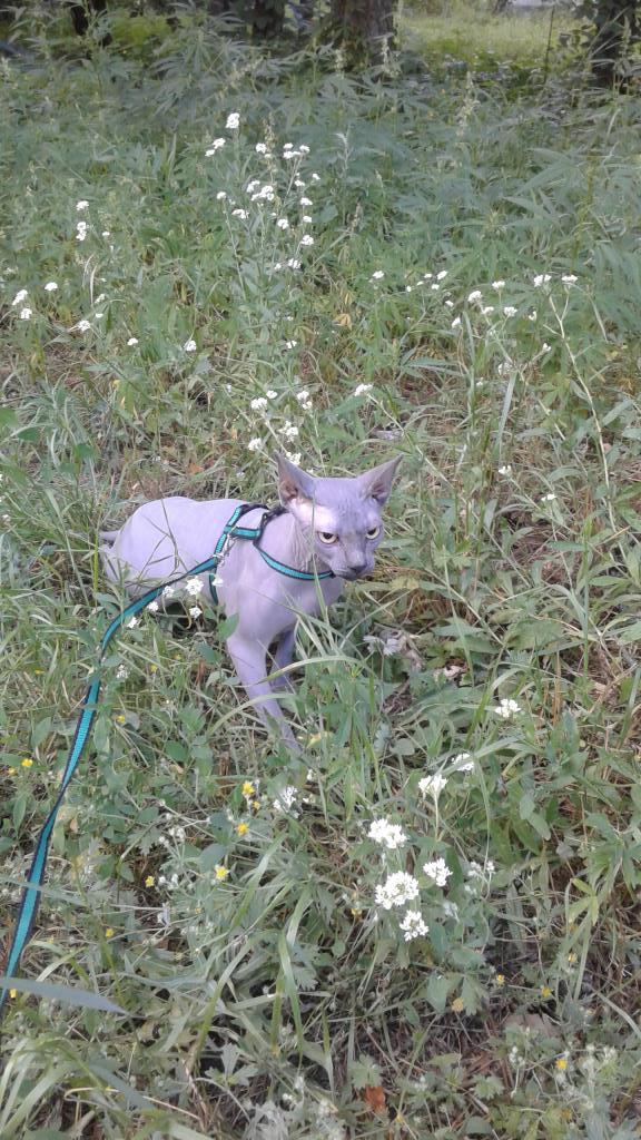 Котик на прогулке . Блиц: все зеленое