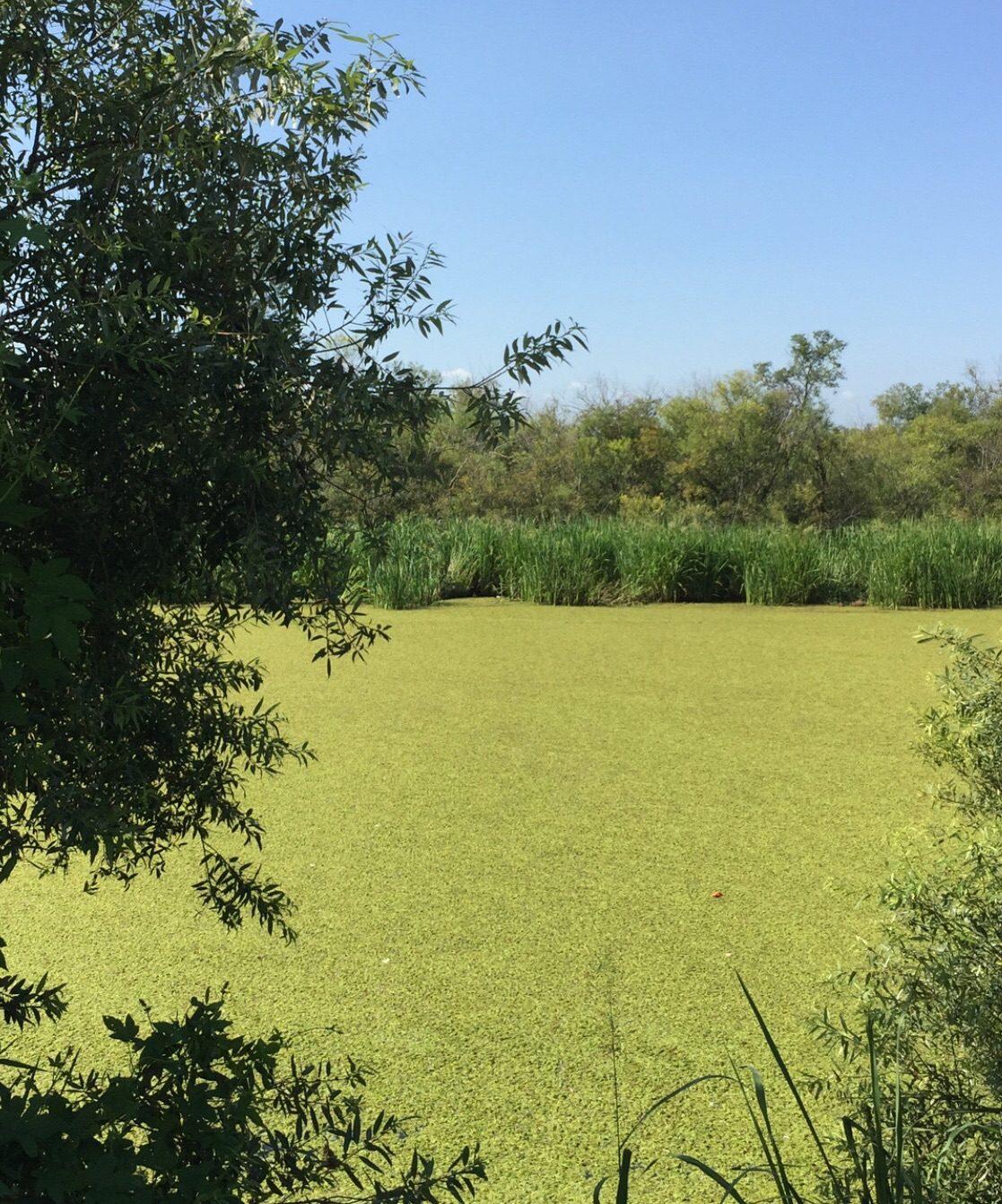 Зелёная река.. Блиц: все зеленое