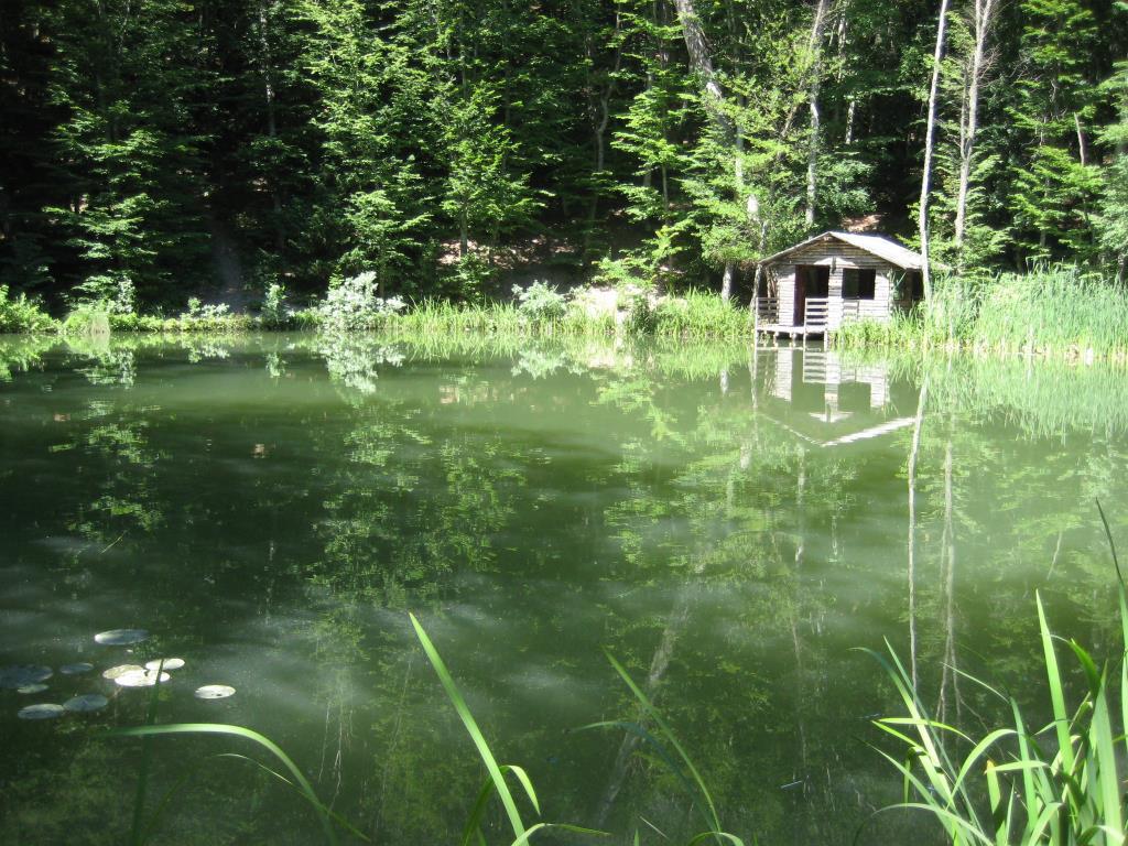 Озеро Караголь (Черепашье) на горе Могаби, Крым. Блиц: все зеленое