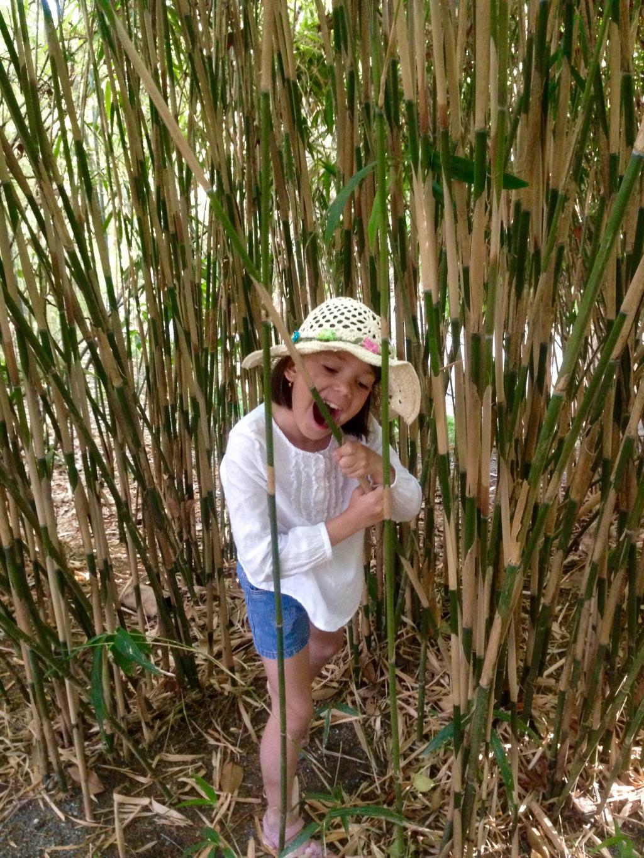 Летняя бамбуковая диета. Наше лето