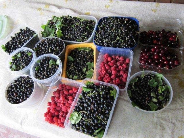 Сколько витаминчиков!. Блиц: сбор урожая