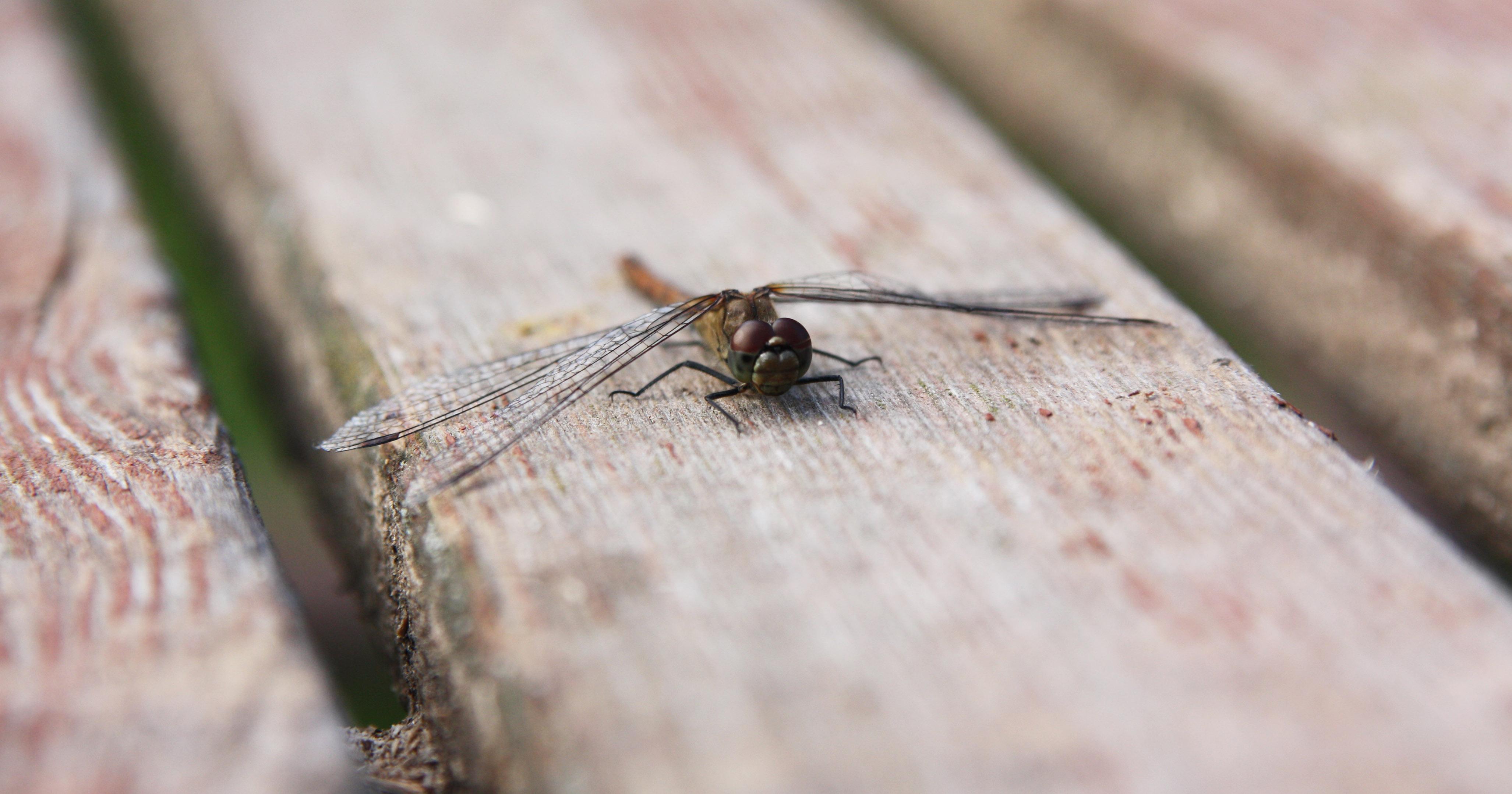 На взлетной полосе.. Блиц: насекомые