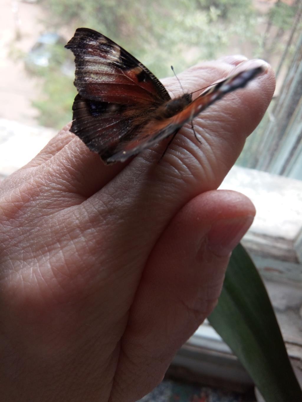 Бабочка на руке. Блиц: насекомые
