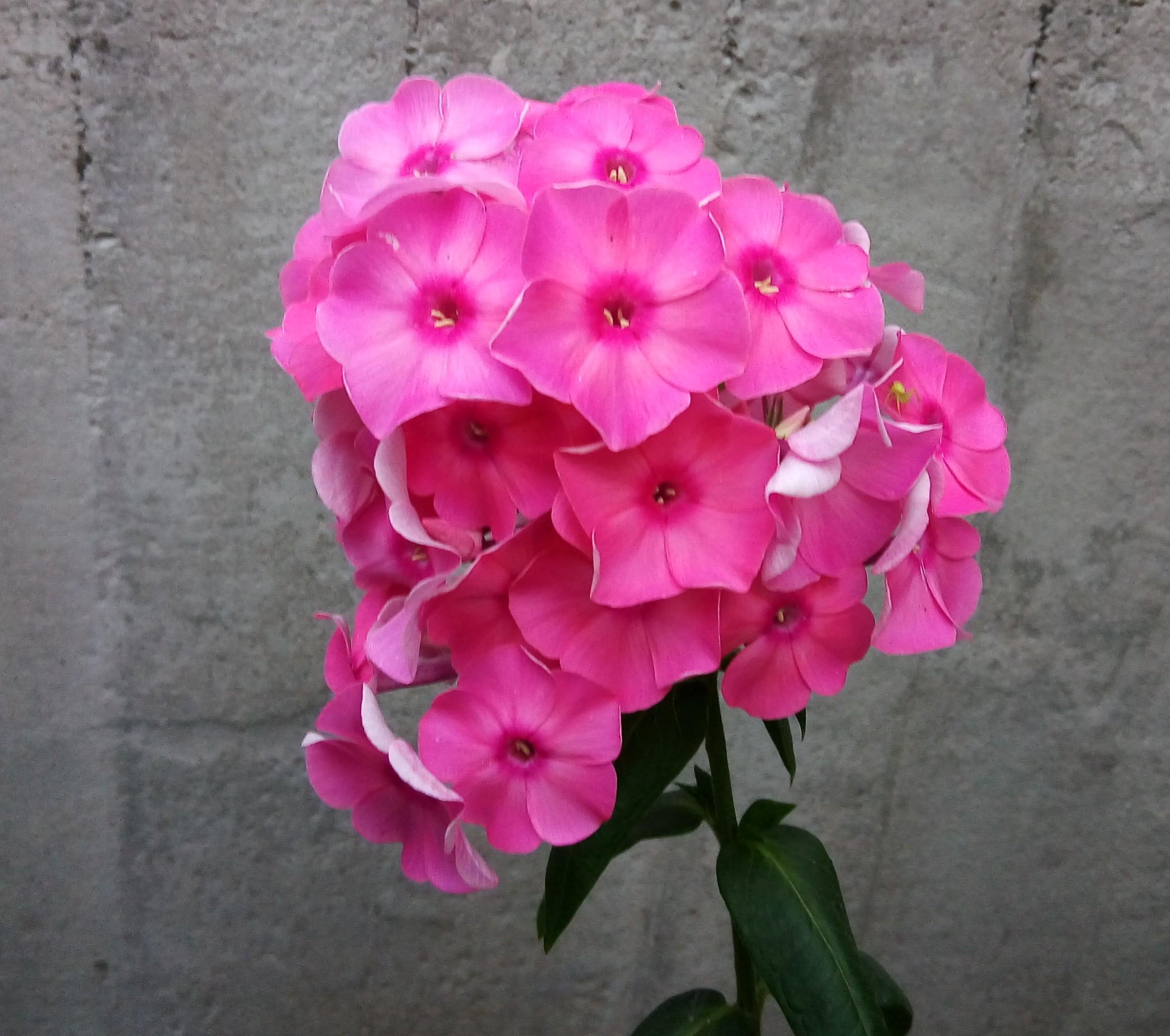 Одна.... Блиц: летние цветы