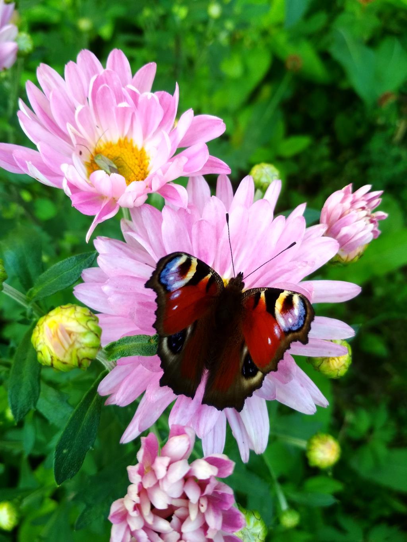 Красота на красоте. . Блиц: насекомые