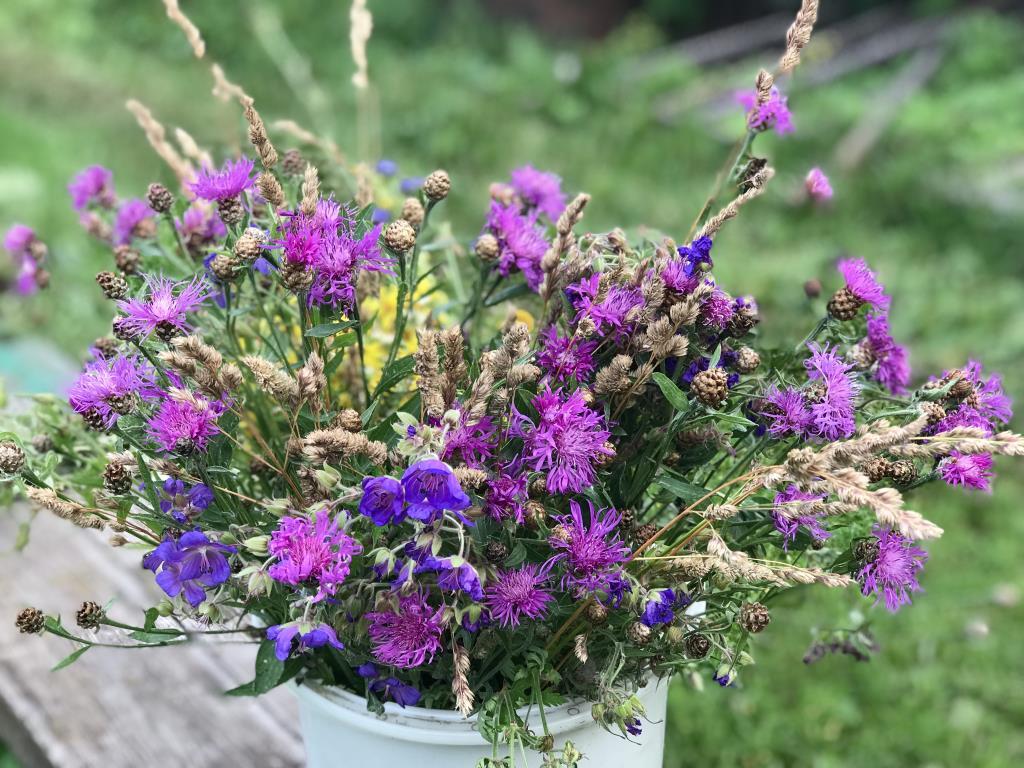 Летние цветы- такие ароматные и нежные. Блиц: летние цветы