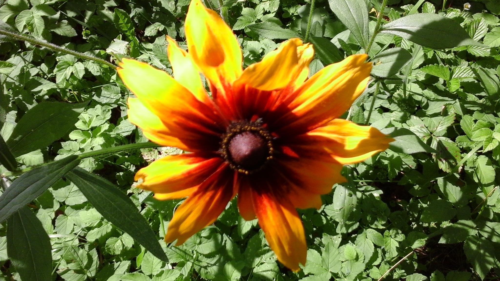 Солнечный цветок. Блиц: летние цветы