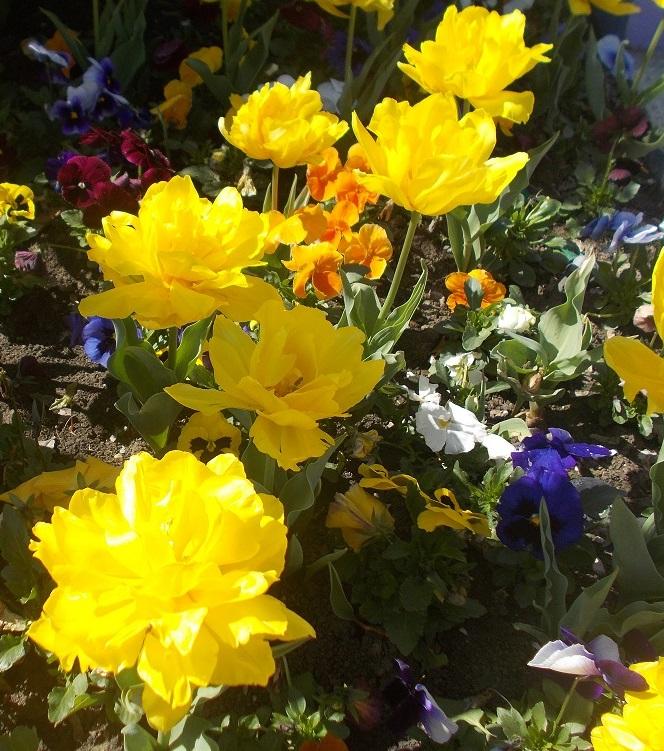 Цвет летнего солнца). Блиц: летние цветы